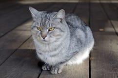 El gato serio se está sentando en el pórche de entrada Imagenes de archivo