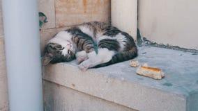 El gato sin hogar duerme en la calle en el verano almacen de metraje de vídeo
