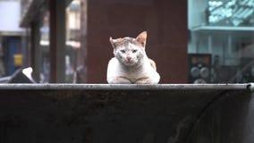 El gato sin hogar lamentable se sienta en el contenedor en calle árabe vieja de la ciudad almacen de video
