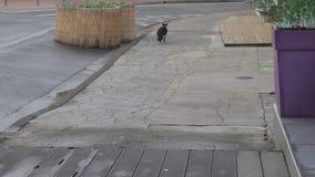 El gato sin hogar mira alrededor y después se va almacen de metraje de vídeo