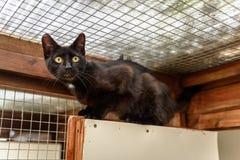 El gato sin hogar necesita un hogar del forever Fotografía de archivo