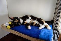 El gato sin hogar necesita un hogar del forever Imagen de archivo libre de regalías