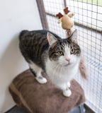 El gato sin hogar necesita un hogar del forever Imágenes de archivo libres de regalías