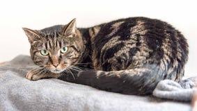 El gato sin hogar necesita un hogar del forever Imagen de archivo