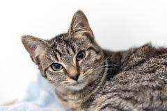 El gato sin hogar necesita un hogar del forever Fotos de archivo