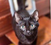 El gato sin hogar necesita un hogar del forever Fotos de archivo libres de regalías