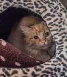El gato sin hogar necesita un hogar del forever Foto de archivo
