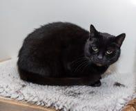 El gato sin hogar necesita un hogar del forever Foto de archivo libre de regalías