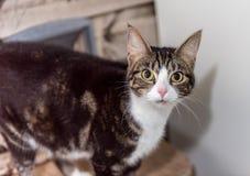 El gato sin hogar necesita un hogar del forever Imagenes de archivo