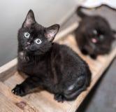 El gato sin hogar necesita un hogar del forever Fotografía de archivo libre de regalías