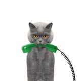 El gato sostiene el teléfono en su boca Imagen de archivo