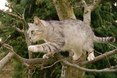 El gato sube un árbol Fotografía de archivo libre de regalías