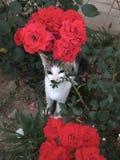 El gato subió Fotografía de archivo libre de regalías