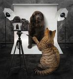 El gato toma una foto foto de archivo