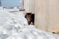 El gato torturado y decaído mira a escondidas hacia fuera de detrás la cerca concreta en invierno fotografía de archivo libre de regalías