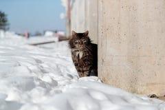El gato torturado y decaído mira a escondidas hacia fuera de detrás la cerca concreta en invierno imagen de archivo