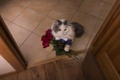 El gato trajo rosas como regalo a su mamá Foto de archivo
