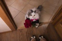 El gato trajo rosas como regalo a su mamá Fotos de archivo
