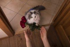 El gato trajo rosas como regalo a su mamá Imagen de archivo