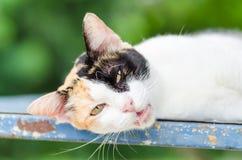 El gato tricolor coloca Imagen de archivo libre de regalías