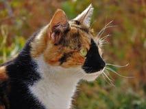 El gato tricolored con geen ojos Foto de archivo