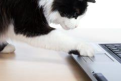 El gato utiliza una computadora portátil Fotografía de archivo