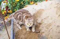El gato va al retrete afuera en la arena fotos de archivo libres de regalías