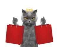 El gato va a hacer compras Imagen de archivo
