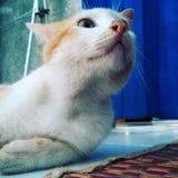 El gato ve Fotos de archivo