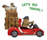 El gato viaja en coche 3 fotos de archivo