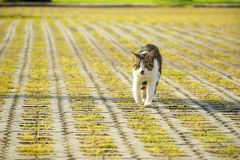 El gato viene de visita Imágenes de archivo libres de regalías