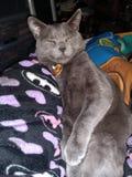 El Gato w spokoju fotografia royalty free