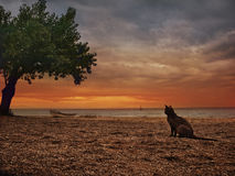 El gato y el mar Fotos de archivo