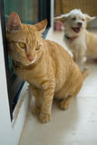 el gato y el perro son amigo Foto de archivo