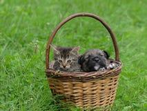 El gato y el perro son amigos Imagen de archivo