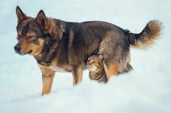 El gato y el perro son mejores amigos Foto de archivo libre de regalías