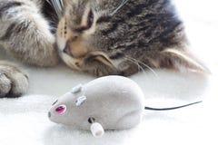 El gato y el ratón soñolientos juegan en la toalla blanca Imágenes de archivo libres de regalías