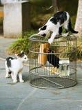 El gato y el tordo Fotos de archivo libres de regalías