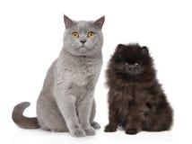El gato y el perro se sienta en el fondo blanco imagen de archivo libre de regalías
