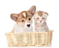 El gato y el perro se sientan en una cesta de mimbre Aislado en el fondo blanco Foto de archivo libre de regalías