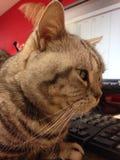 El gato y sobresale Foto de archivo