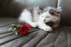 El gato y subió en el sofá Imagen de archivo libre de regalías