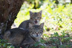 El gato y sus gatitos Fotos de archivo libres de regalías