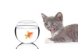 El gato y un pescado en un pescado ruedan Foto de archivo libre de regalías