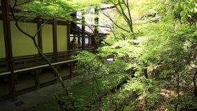 El geisha adentro Eikan-hace templo almacen de video