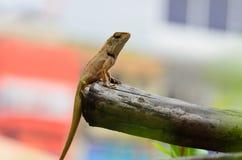 Fauna de los animales Fotos de archivo