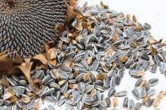 El girasol dirige las semillas de la cosecha Foto de archivo