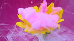 El girasol y la tinta rosada se nublan la infusión en el agua almacen de metraje de vídeo