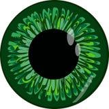 El globo del ojo humano Imágenes de archivo libres de regalías