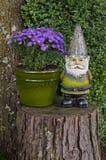 El gnomo que se coloca en tocón de árbol al lado de aster florece Fotografía de archivo